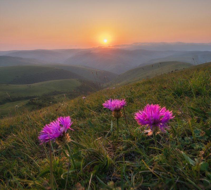 северный кавказ, приэльбрусье, джилы-су, цветы, вечер, июль Однажды вечером в горахphoto preview