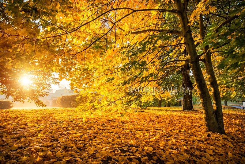 москва, царицыно, осень, пейзаж Рыжая осеньphoto preview