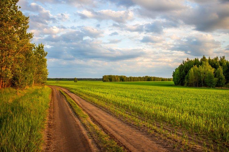 дорога, поле, лес, небо, вечер, дали photo preview