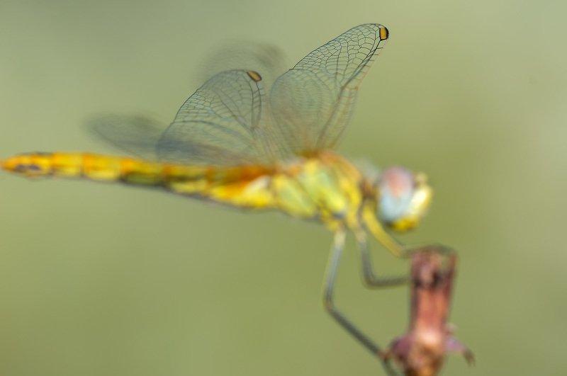 Крылья ...photo preview