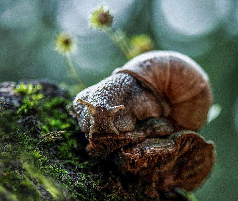 улитка, тихоход,лето,лес, природа, snail, cochlea, mystery, summer, forest, nature На лесной опушке...photo preview