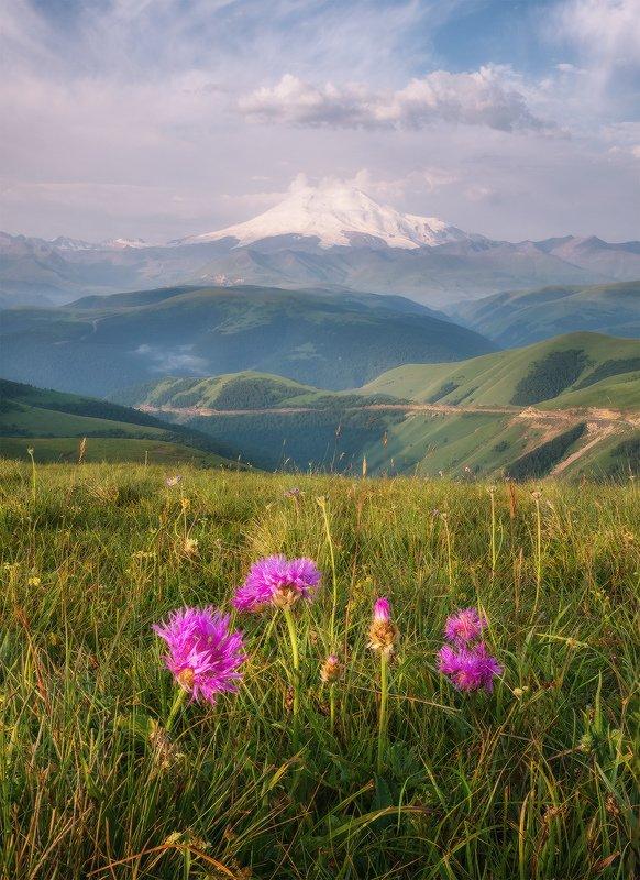северный кавказ, приэльбрусье, эльбрус, джилы-су, утро, июль, Утро в Приэльбрусьеphoto preview