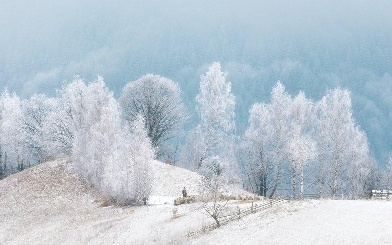 зима, иней, отара, деревья, снег Один день февраляphoto preview