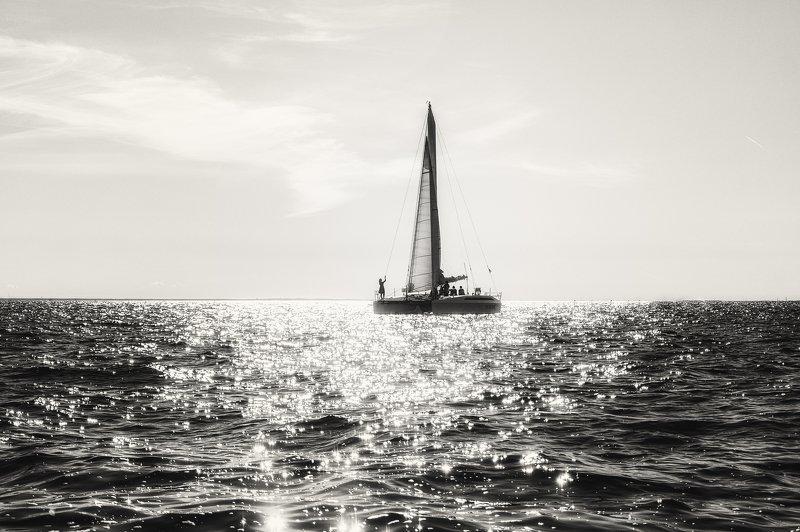 вода, катамаран, лето, чернобелое, девушка, прогулки, залив К горизонту...photo preview