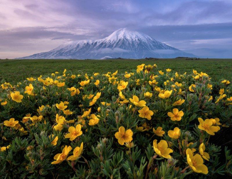 камчатка Толбачик и цветы. фото превью