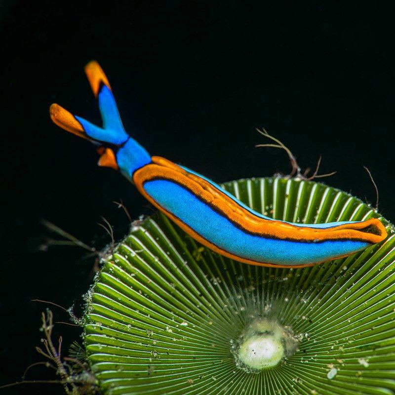 underwater, macro, slug, mollusca S L U G - A R Tphoto preview