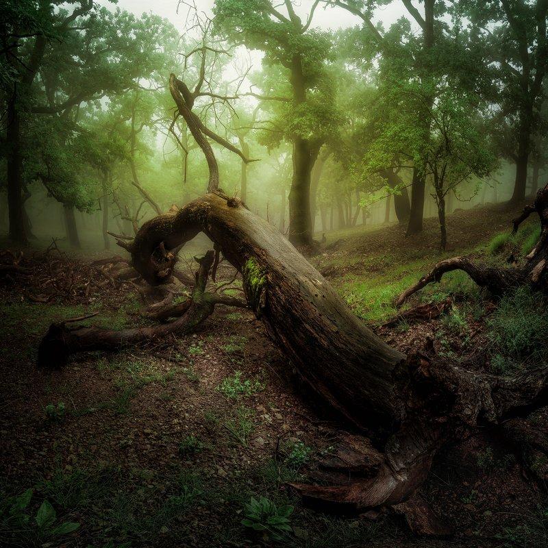 Stump of Little Carpathiansphoto preview