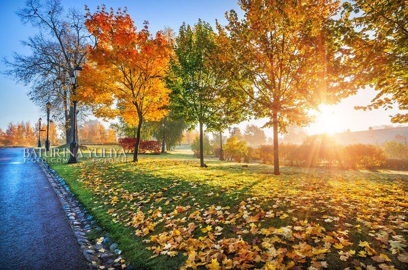 москва, осень, царицыно Разноцветные деревьяphoto preview