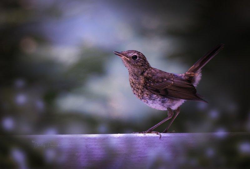 природа, лес, поля, огороды, животные, птицы, макро Подиум фото превью