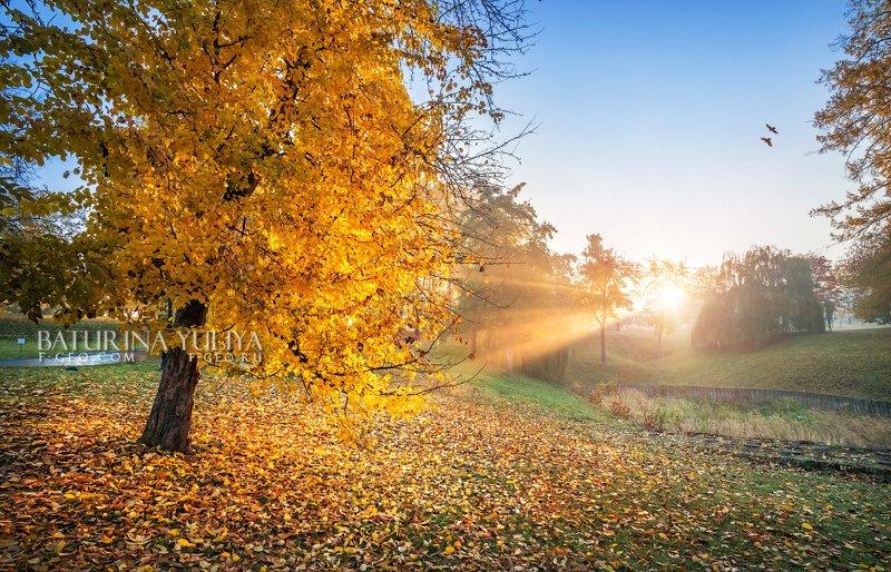 москва, царицыно, осень Птицы в небеphoto preview