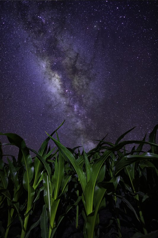 corn, milky way, cornfield, astrophotography Children of Cornphoto preview