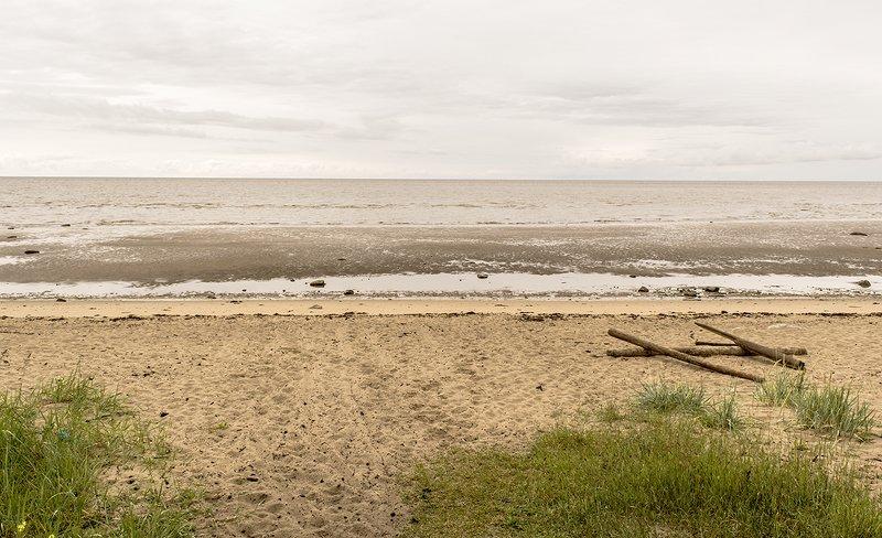 сосенка Белое море.photo preview