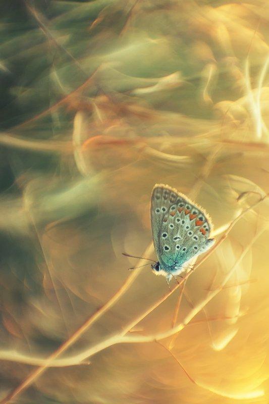 макро, бабочка На светлой сторонеphoto preview
