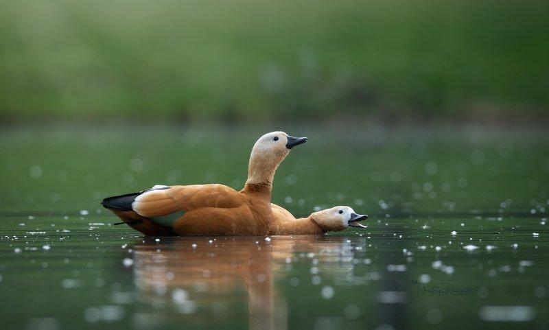 природа, лес, поля, огороды, животные, птицы, макро Парочка фото превью
