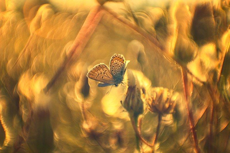 макро, бабочка Что нам стоит дом построить...нарисуем, будем жить!photo preview