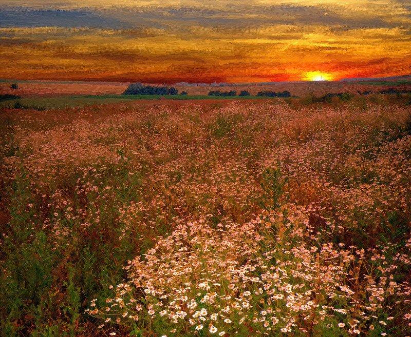 digital art Цветы на закате.photo preview