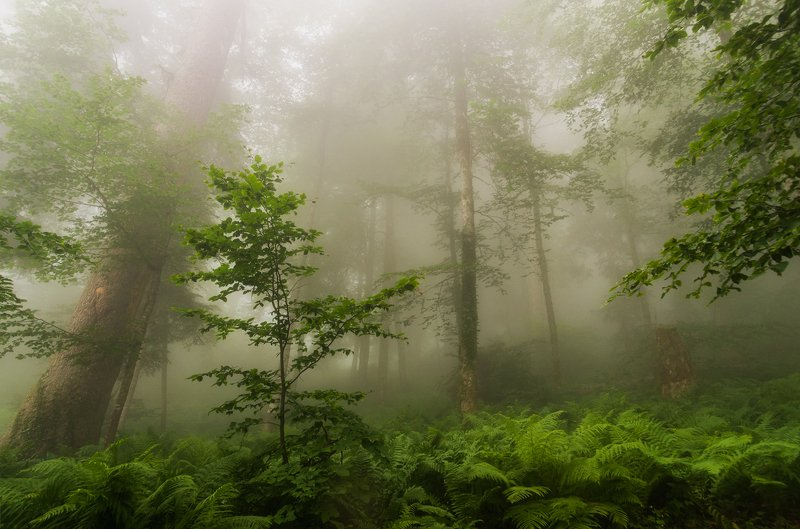 Утро в эльфийском лесуphoto preview