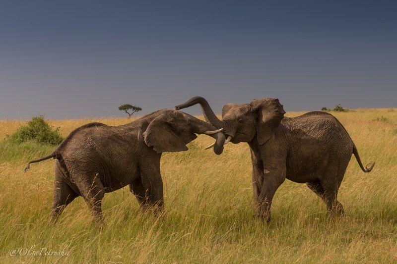 Игры слоников.