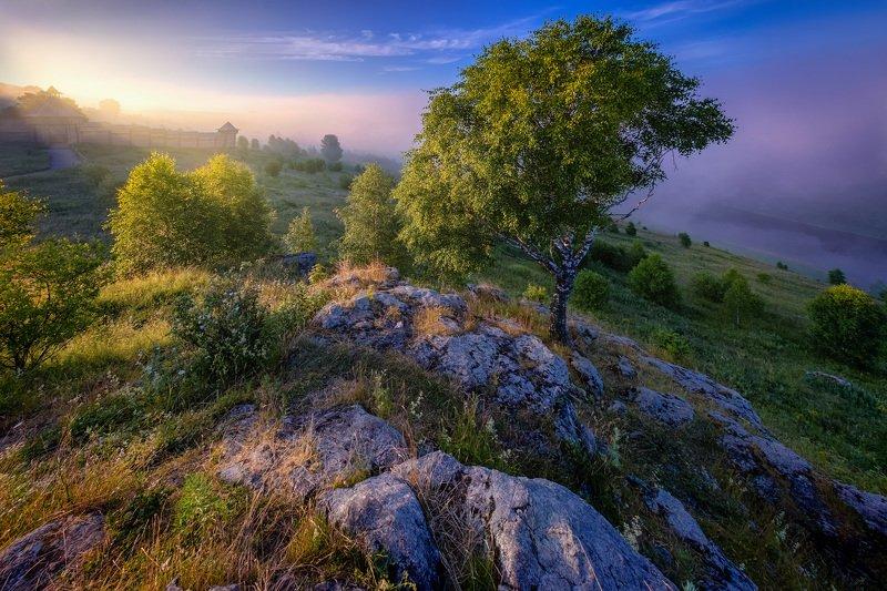 камни, скалы, дерево, береза, крепость, старая, косьва, река, утро, туман, губаха, урал Береза в скалах фото превью