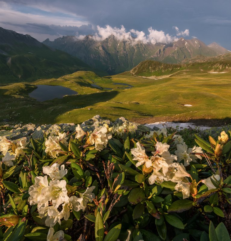 северный кавказ, загеданский хребет, пятиозёрье, рододендроны, вечер, июль Вечерний букетphoto preview