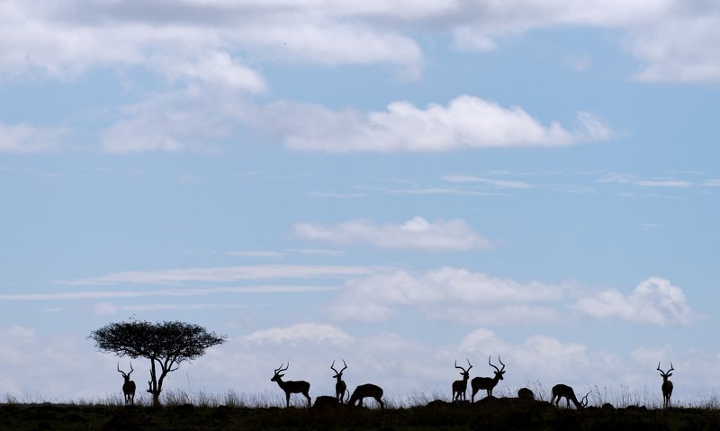 animals mammals gazelles africa kenya silhouette sky clouds pastel African silhouette photo preview