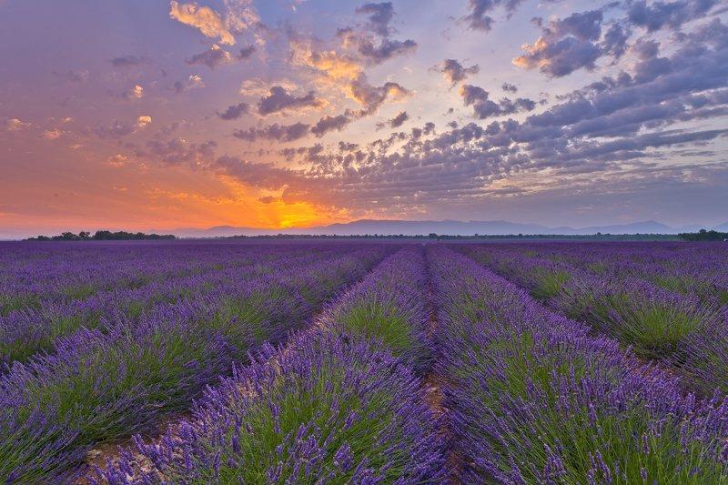 sunrise lavender provence france lights fields sky Sunrise lights in lavender fieldsphoto preview