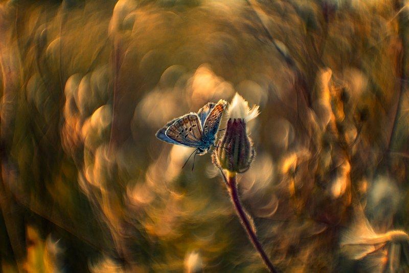 макро, бабочка Про бабочкуphoto preview