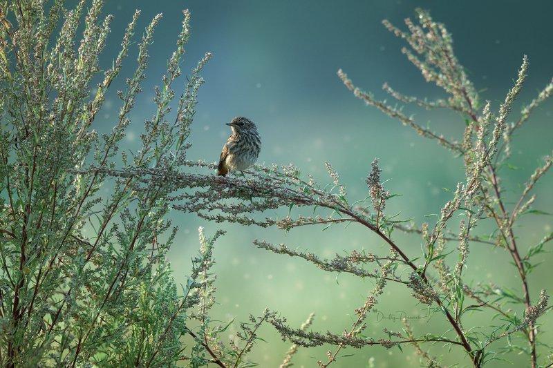 природа, лес, поля, огороды, животные, птицы, макро На рассвете фото превью
