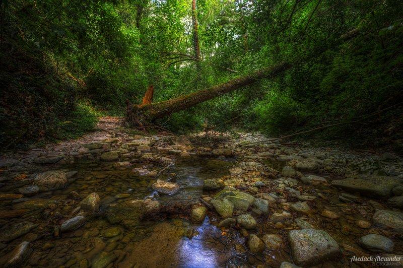 Упавшее дерево на Красной Речкеphoto preview