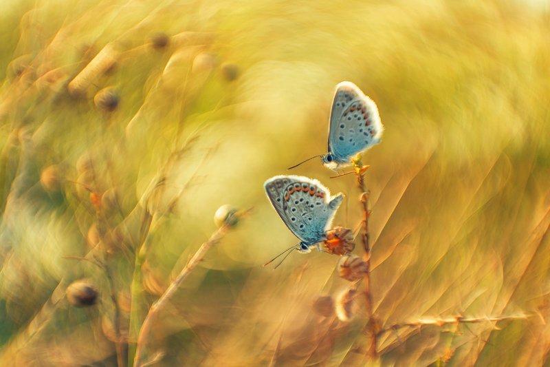 макро, бабочка Лето скоротечноеphoto preview