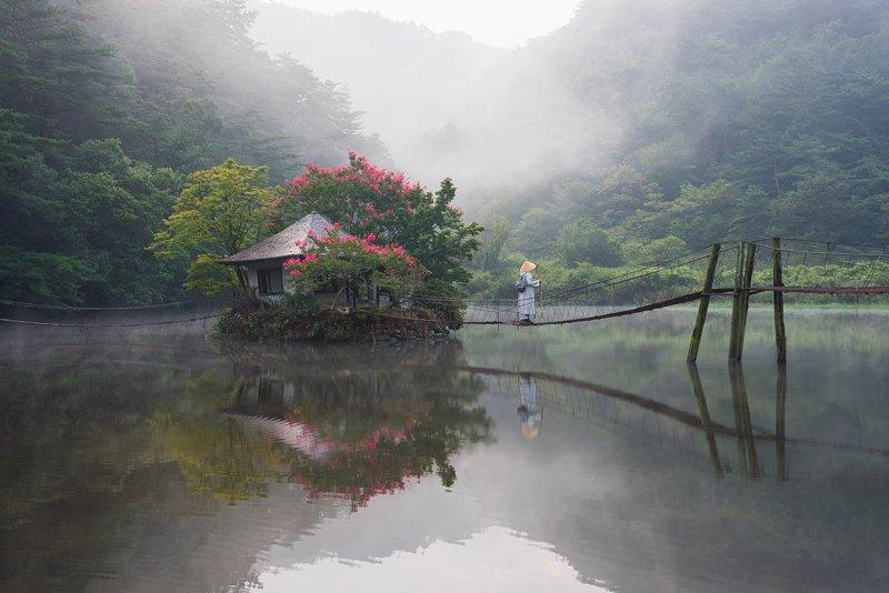 summer, forest, place, korea, blossom, pavilion, misty, reflection, garden, magic, travle, asia Summer wandererphoto preview