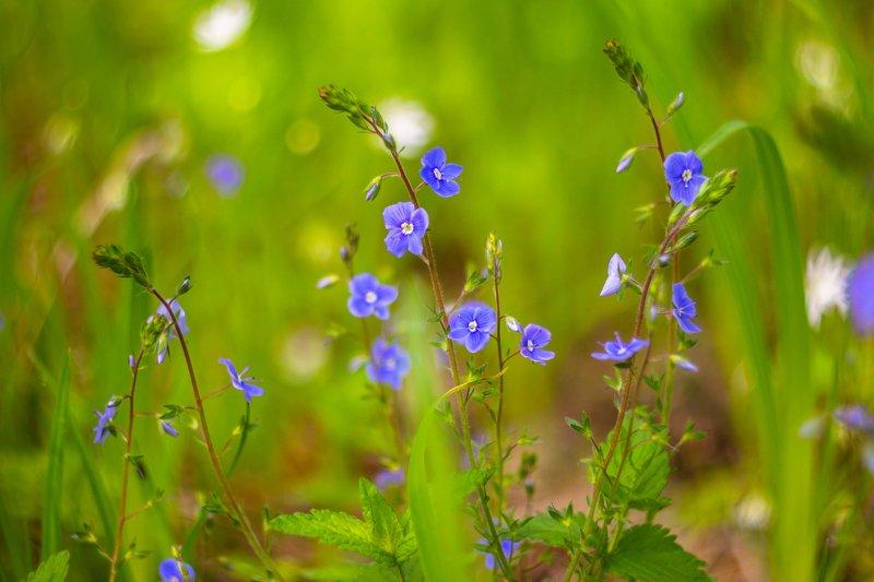 цветы, весна photo preview