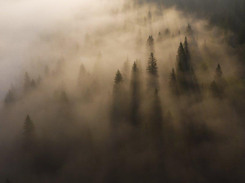 туман, лес, тайга, свет, рассвет, утро, дымка Магия таежного утраphoto preview