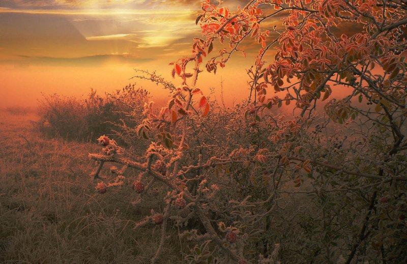 digital art Рано утром, на рассвете.photo preview