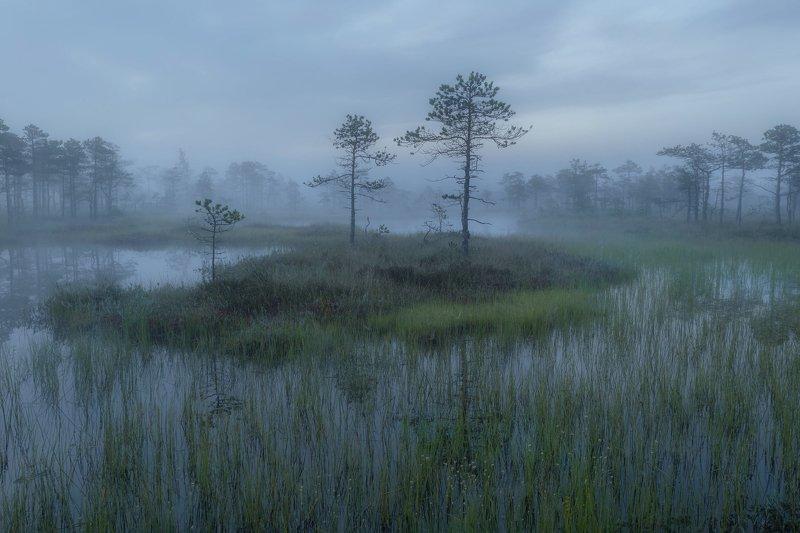 болото, кайф, рассвет ,север ,солнце, свет, закат, облака, отражение, фототур Болотное утроphoto preview