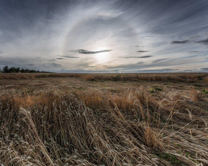 пейзаж, поле, солнечное гало, пшеница, тульская область, природа Тульская областьphoto preview