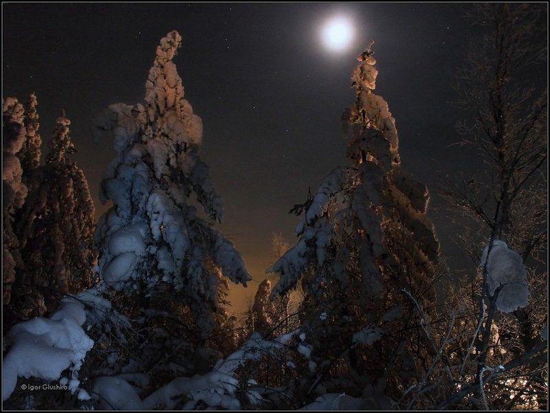бурятия, тайга, лес, деревья, снег, ночь, зима Подлуннаяphoto preview