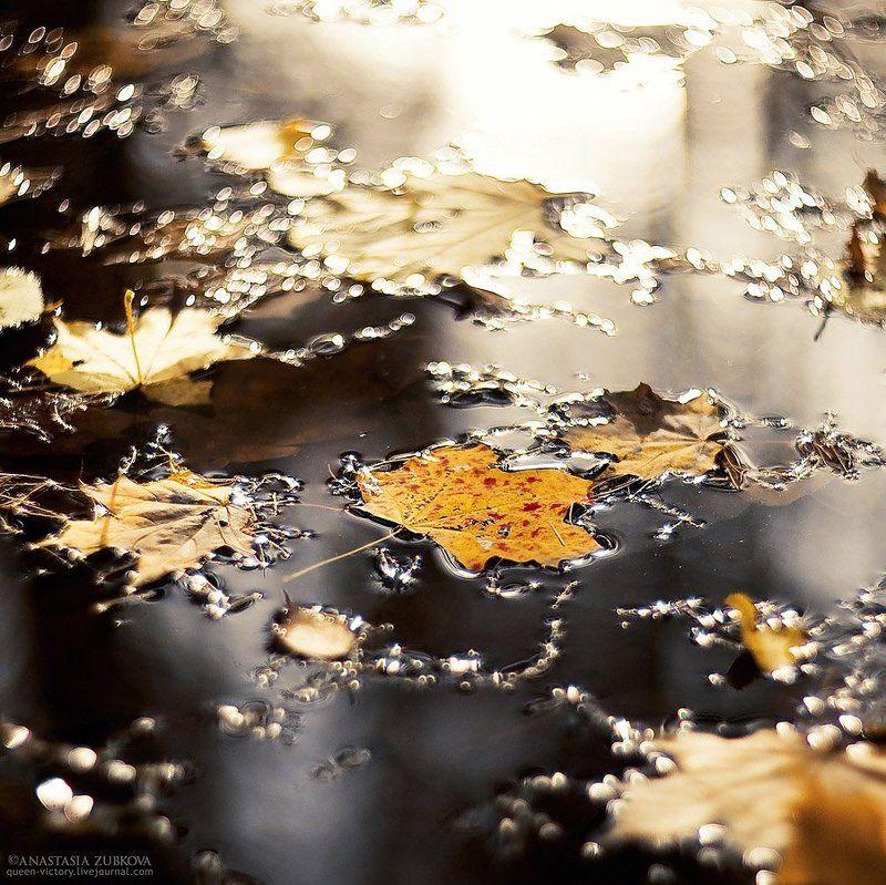 осень, клён, лужа Золото в жидком асфальтеphoto preview