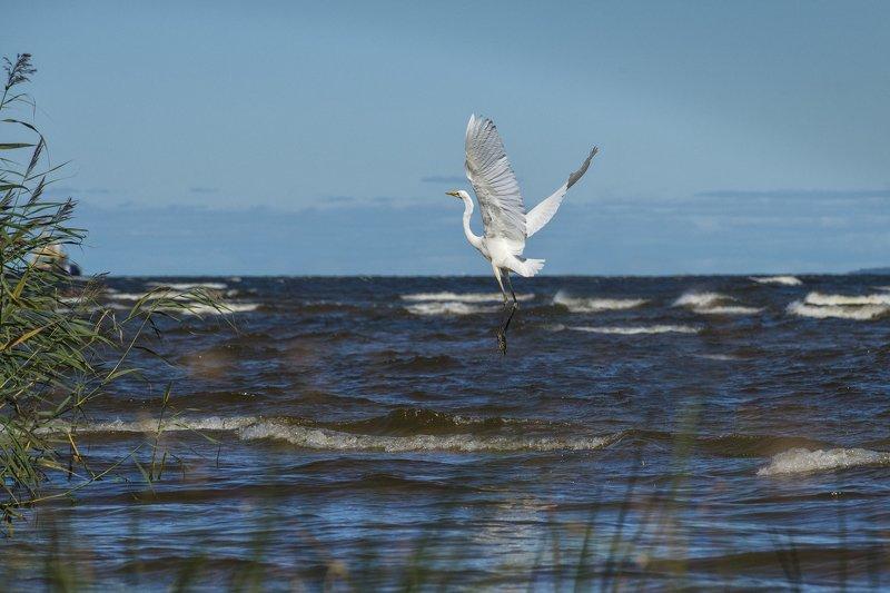 Бегущая по волнам...photo preview