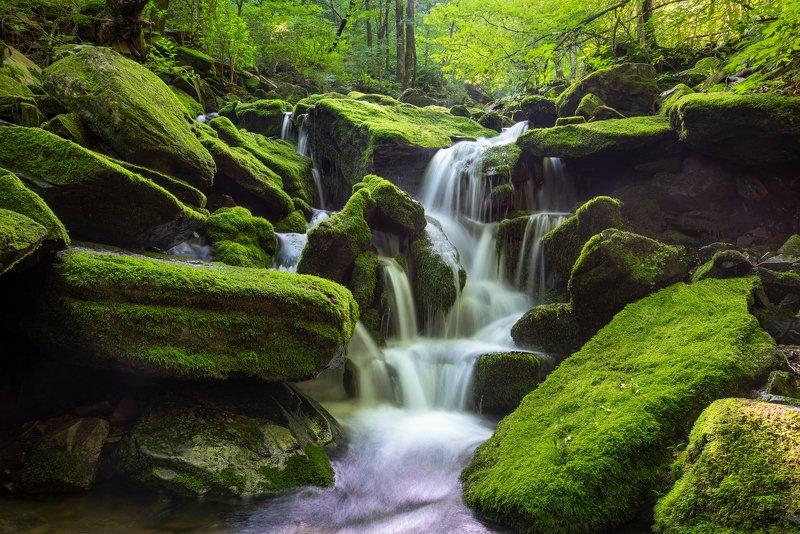 forest, summer, place, korea, trees, waterfalls, moss, light Green waterfallsphoto preview