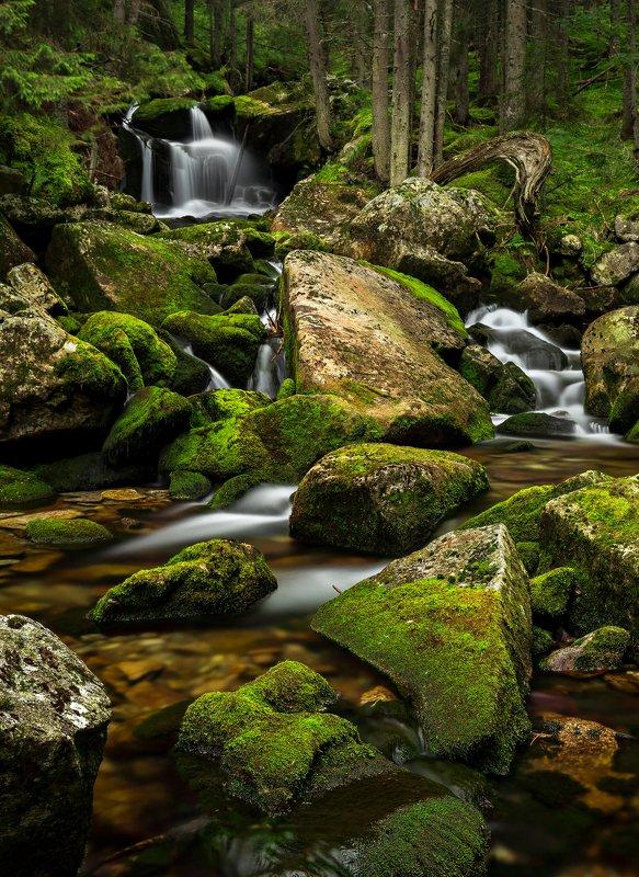 autumn, trees, river, green, waterfall, travel, nature, landscape, romania, retezat Green Forestphoto preview