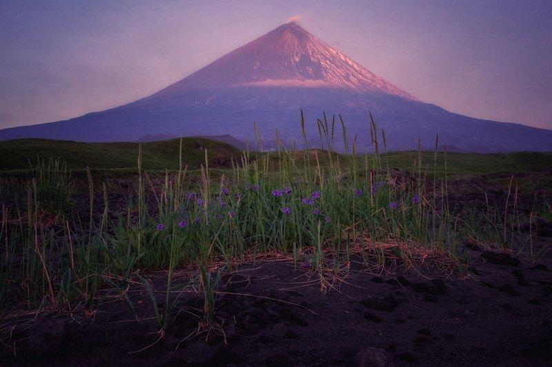 камчатка,вулкан,ключевская сиреневое утроphoto preview