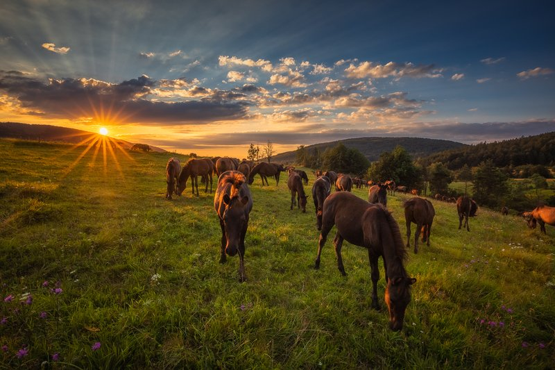 Sunset with horses photo preview