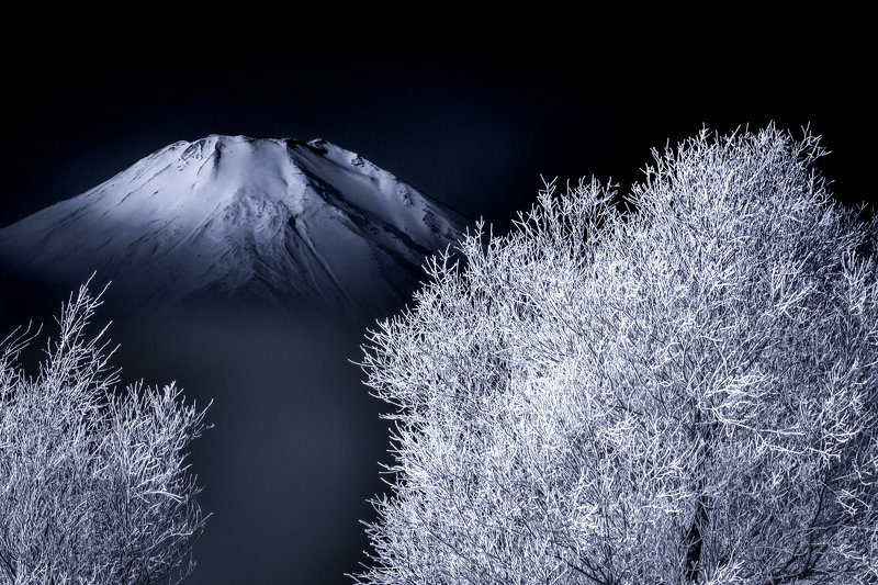 Fuji,Japan,mountain,snow,tree,cool,winter,rime,ice The white worldphoto preview