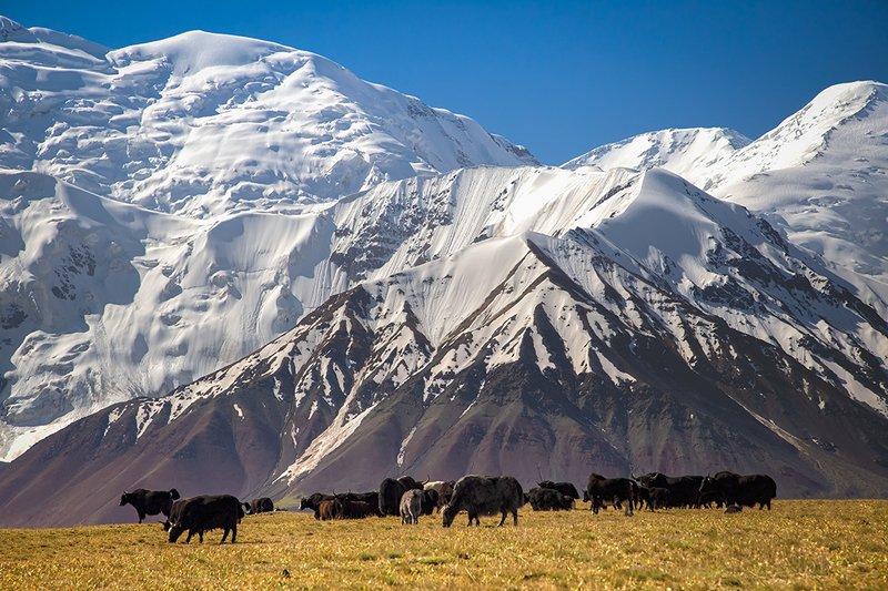 кыргызстан, горы Яки Памираphoto preview
