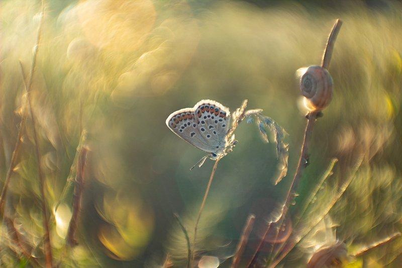 макро, бабочка В омут с головойphoto preview