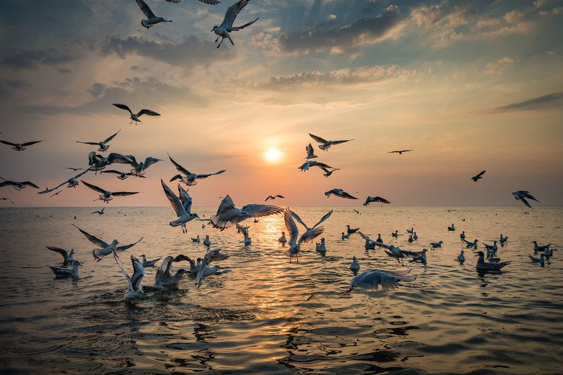 dance of seagulls water sun clouds baltic sea dranikowski mewy birds sunset Dance of Seagullsphoto preview