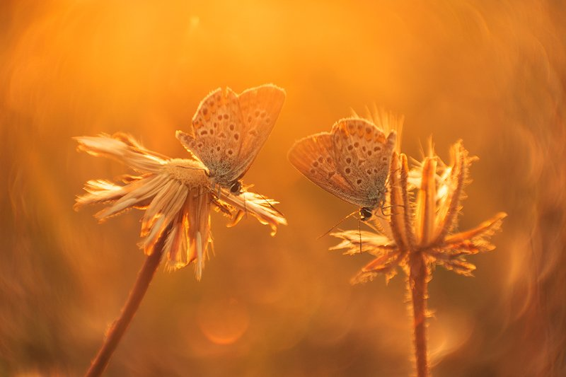 макро, бабочка Общий интересphoto preview