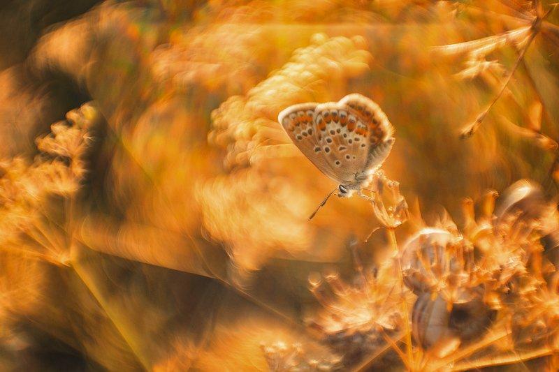 макро, бабочка В пещере Аладдинаphoto preview