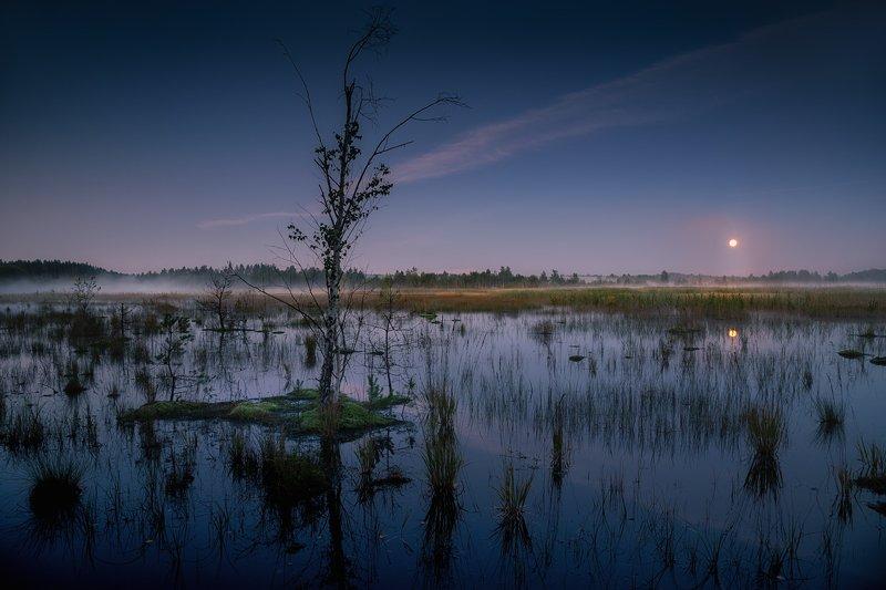 Цепнинские болота ... фото превью